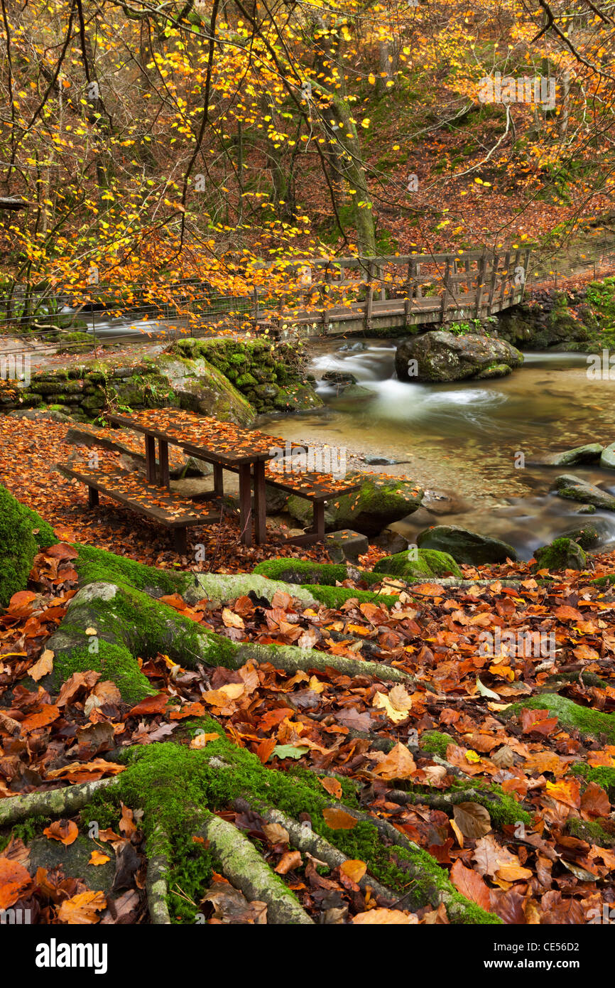 Picnic bench and bridge in an autumnal woodland beside Stock Ghyll river, Ambleside, Lake District, Cumbria, England. - Stock Image