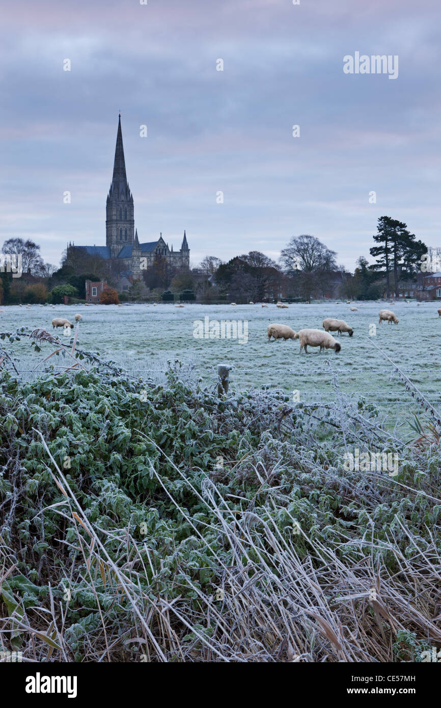 Salisbury Cathedral on a frosty winter morning, from across the Water Meadows, Salisbury, Wiltshire, England. - Stock Image