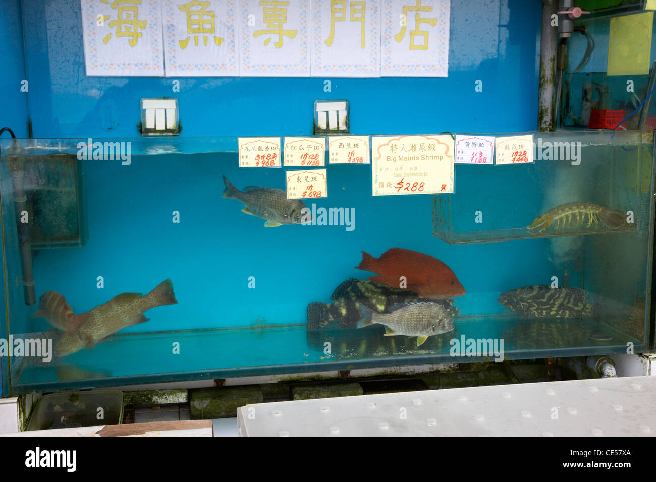 fresh fish for sale in a seafood restaurant kennedy town hong kong hksar china asia - Stock Image