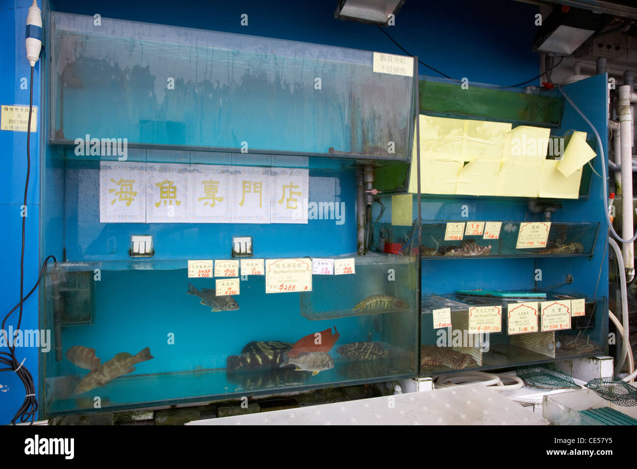 fresh fish for sale in tanks in a seafood restaurant kennedy town hong kong hksar china asia - Stock Image