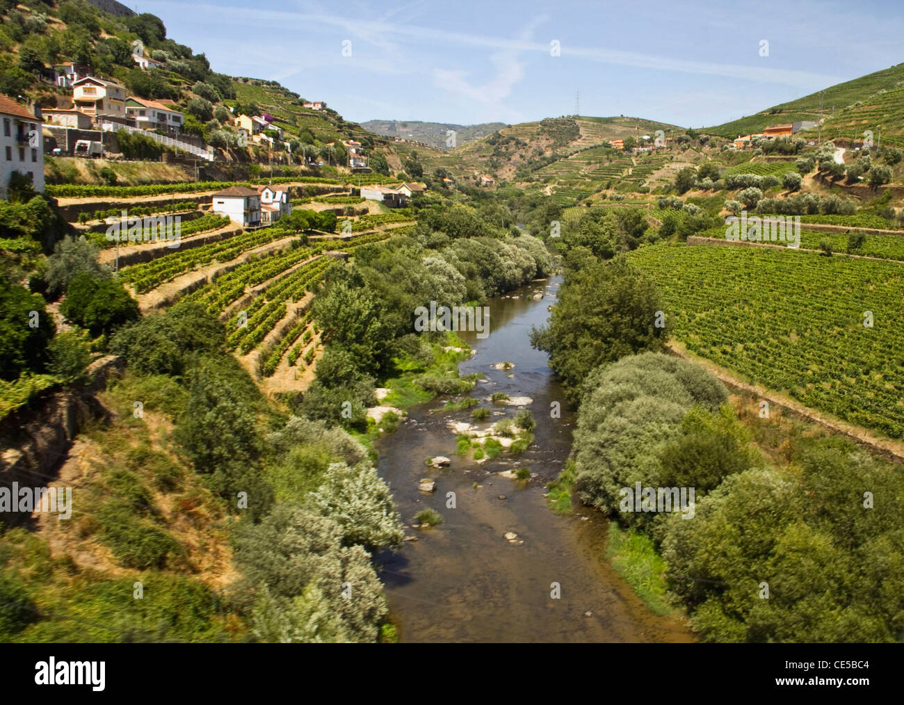 Portugal, Porto.  Vineyards along the Douro River in Northern Portugal near Regua. Seen from the Linha do Douro - Stock Image
