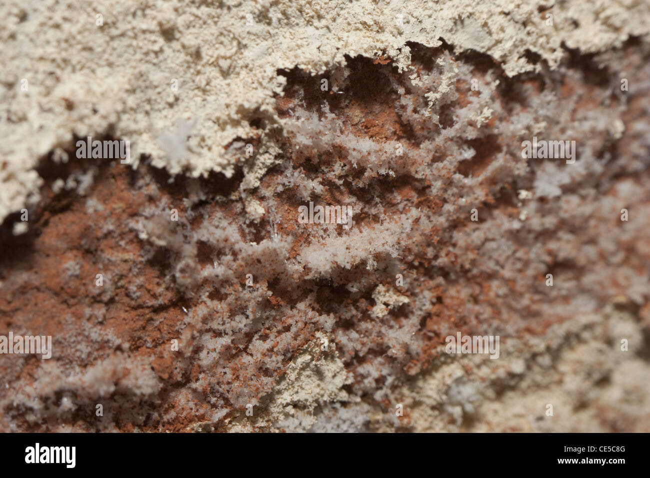 Macro shot of salts being leech out of a brick wall by raising damp - Stock Image
