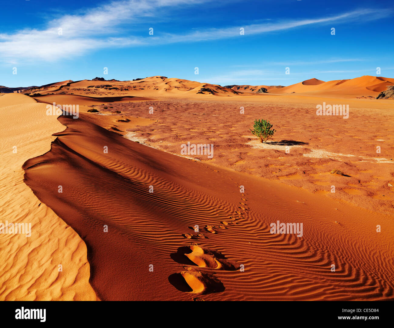 Single tree in Sahara Desert, Algeria - Stock Image