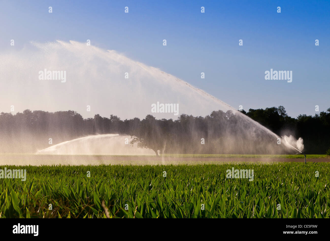 Watering of maize field in Limagne, Auvergne, France - Stock Image