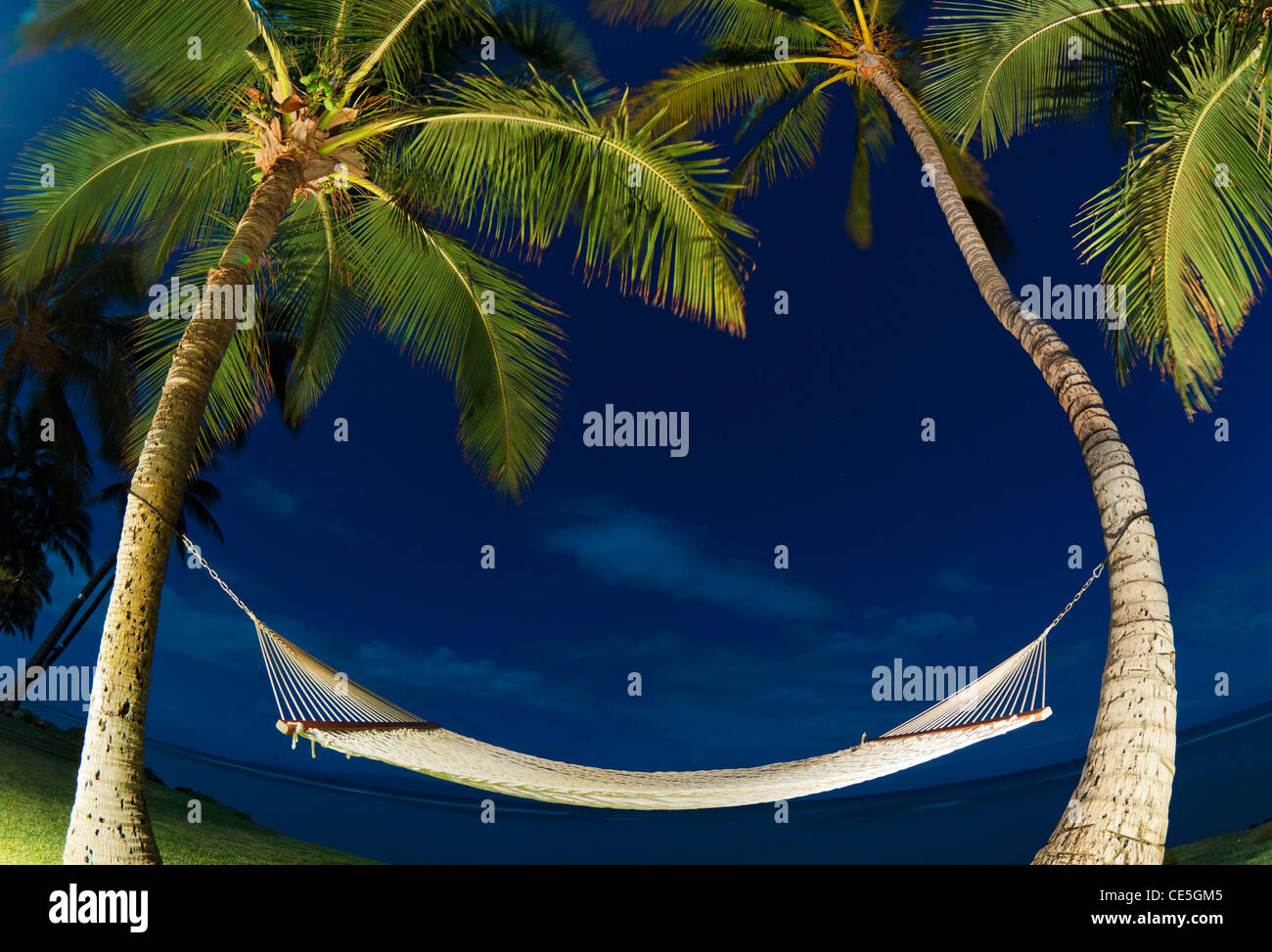Tropical Night, Palm Trees and Hammock - Stock Image