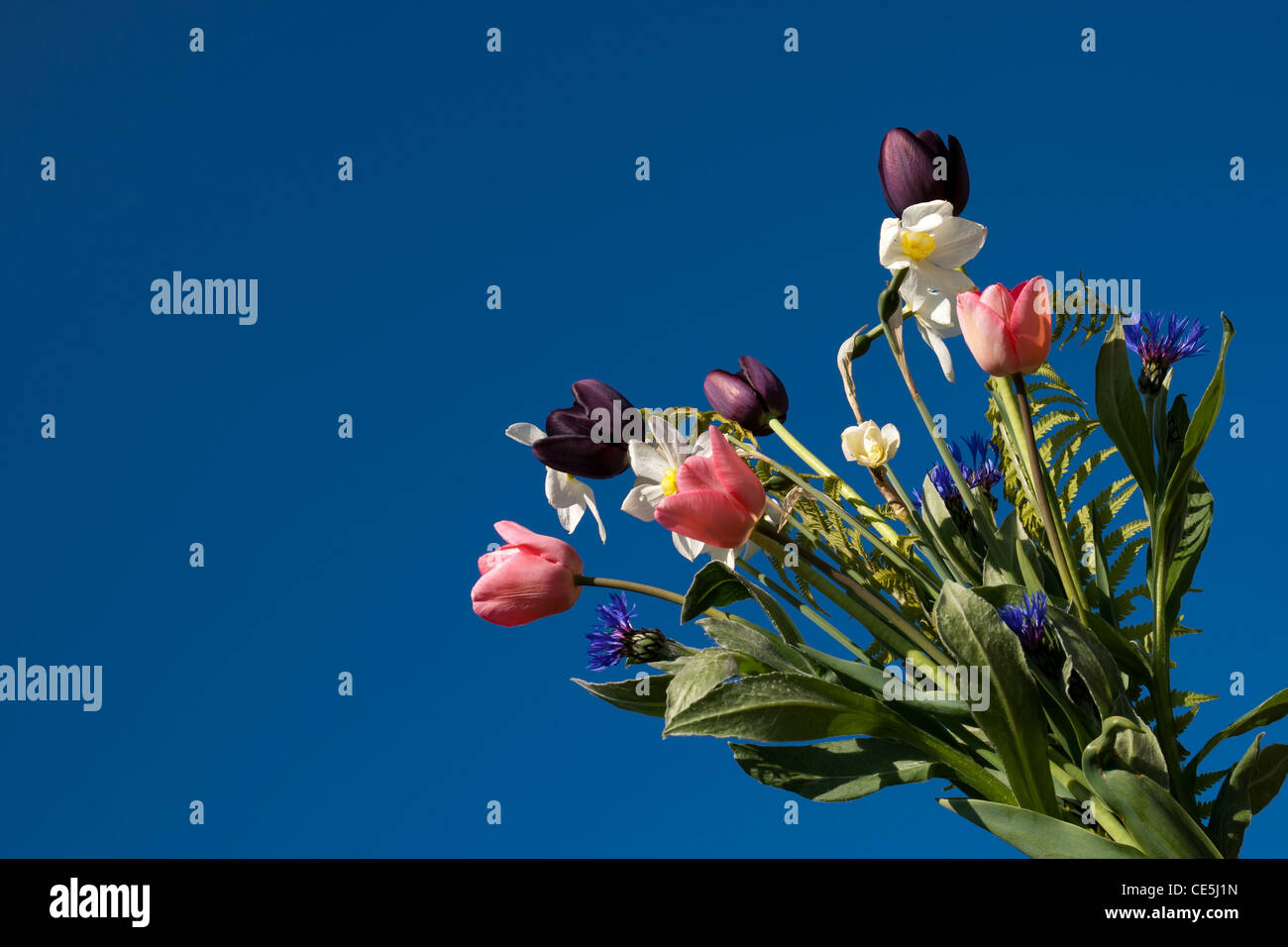Spring flower bouquet over a  blue sky - Stock Image