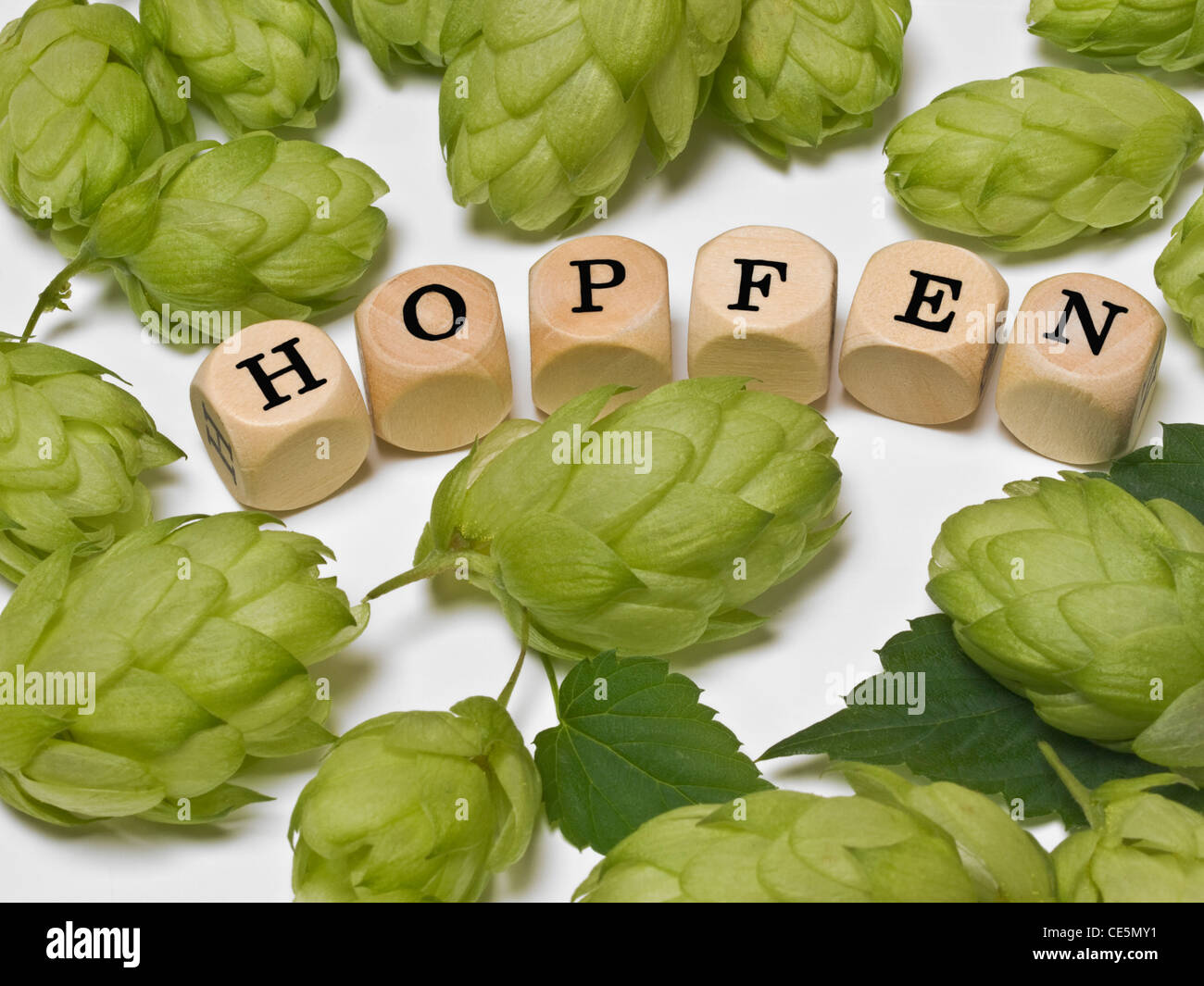 Detail photo of Lemon balm leaves alongside are cubes which form the word 'hop' in German - Stock Image