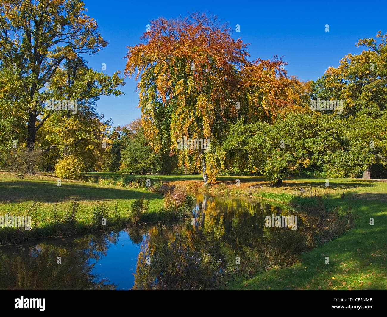 Bäume mit bunten Blättern stehen an einem Kanal | Trees with colored leaves are at a sewer - Stock Image