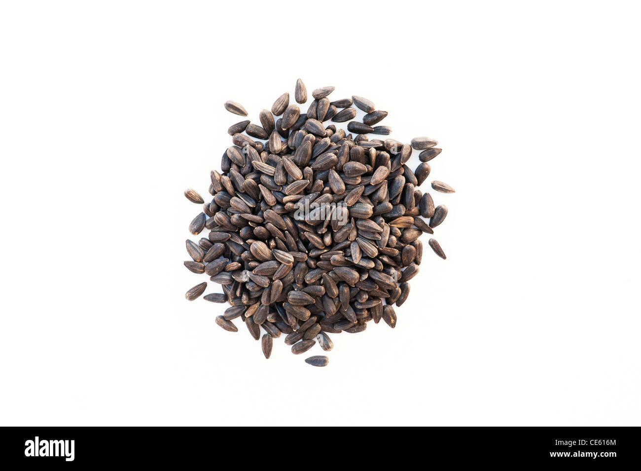 Sunflower seeds on white background - Stock Image