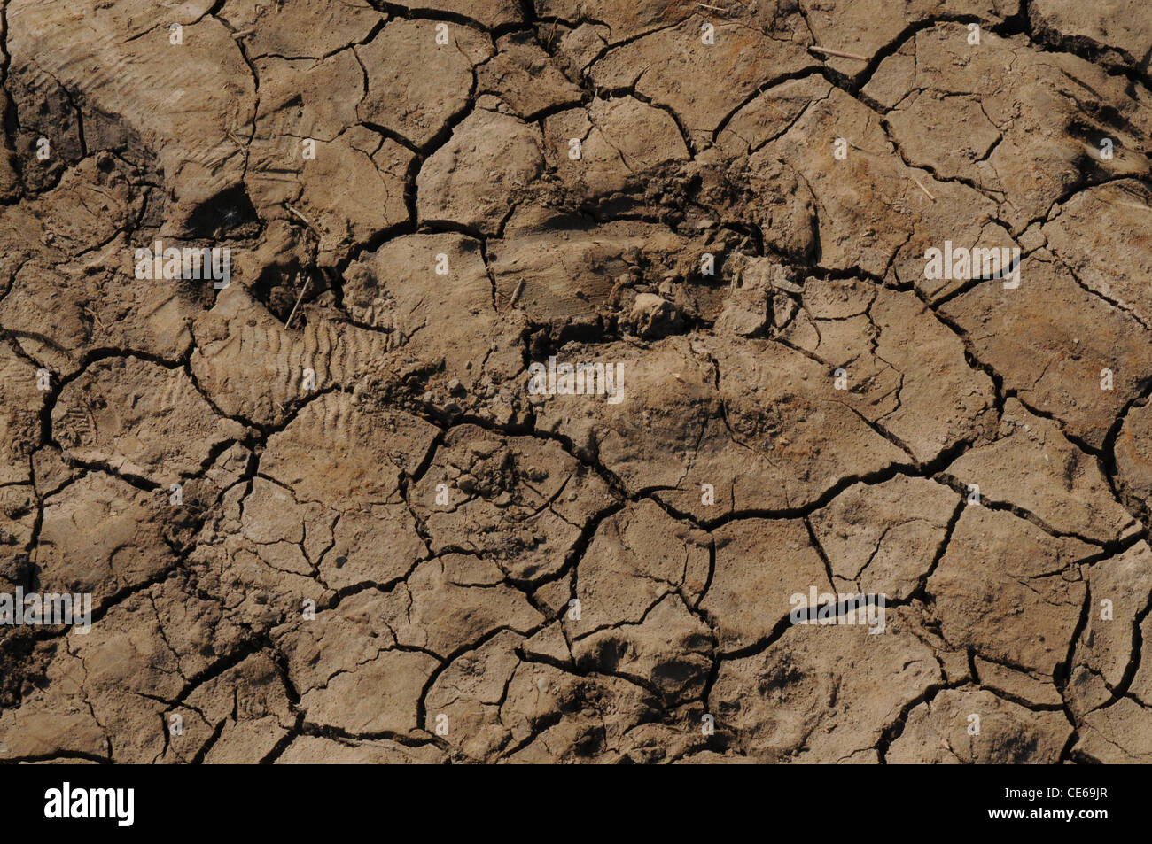 Foot prints preserved in dried mud - Stock Image
