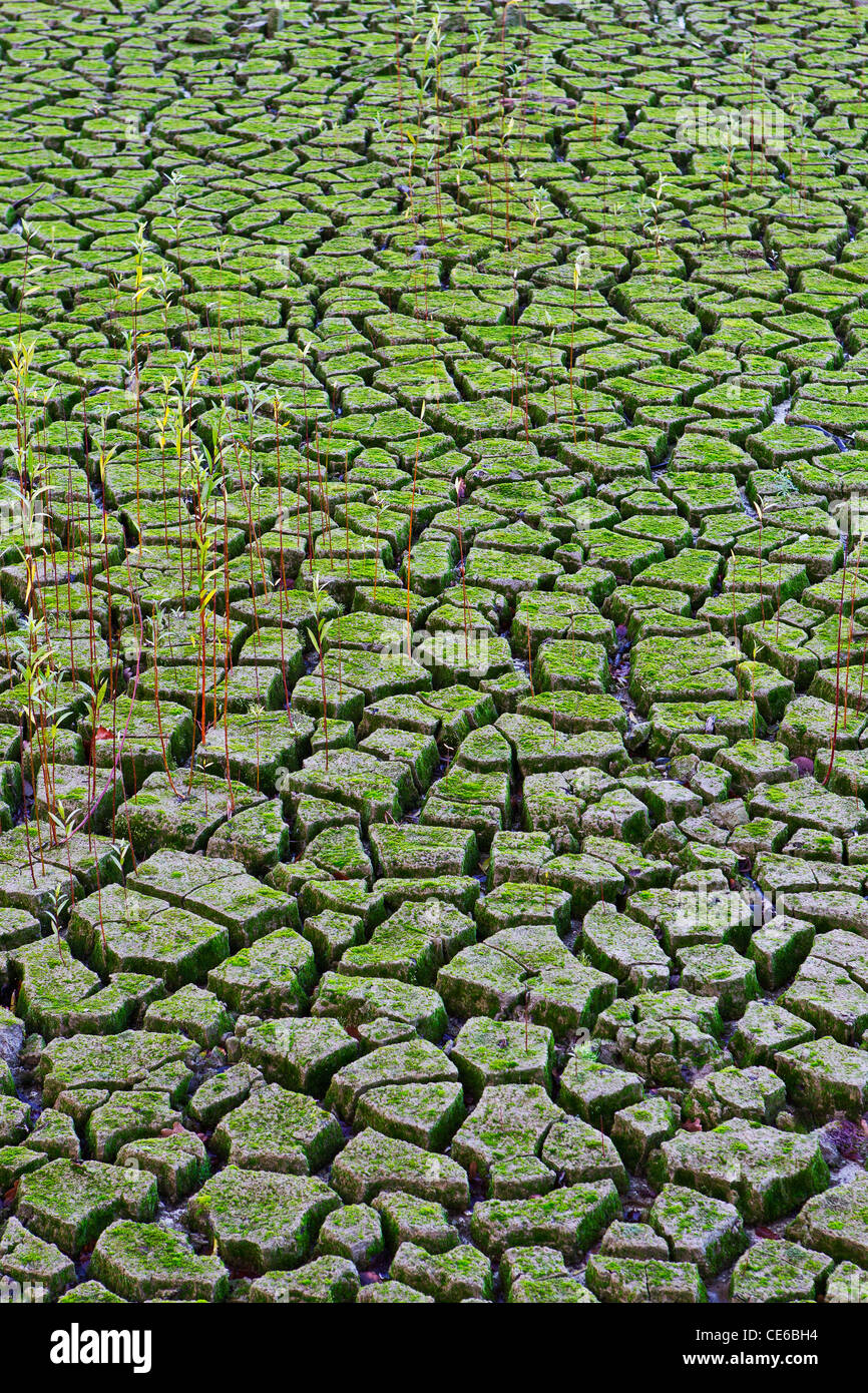 dried earth - Stock Image