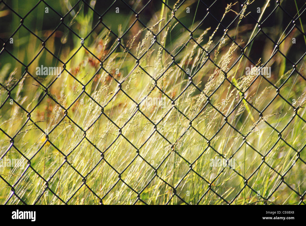 Iron wire mesh security fence Stock Photo: 43166992 - Alamy