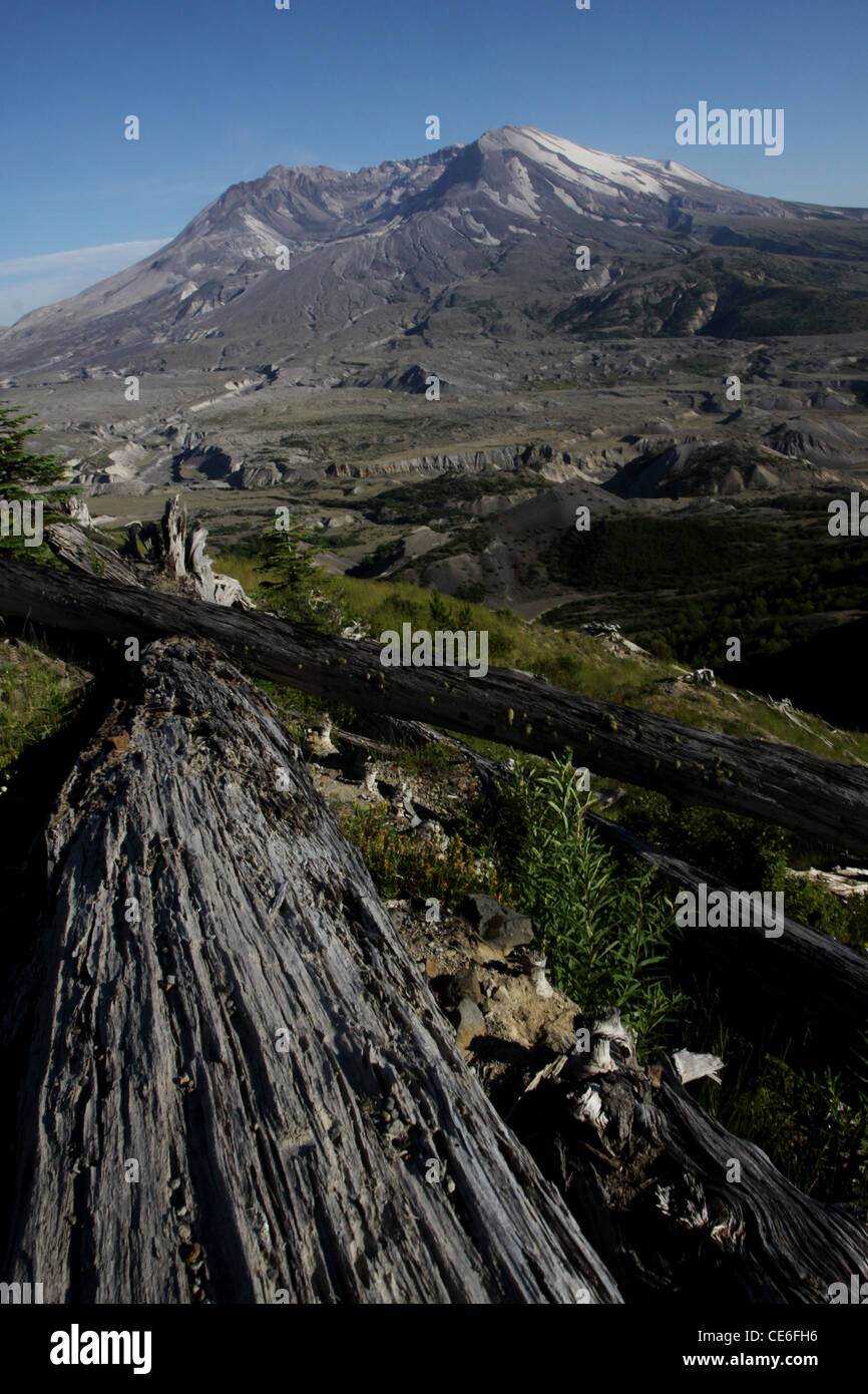 trees killed from 1980 eruption Mount St Helens Volcano ...