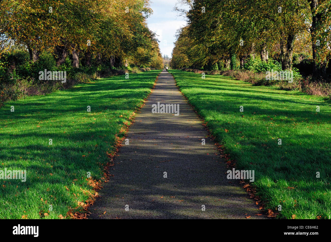 carton walk maynooth ireland Avenue path walkway trail lead head leading heading distant distance tree - Stock Image