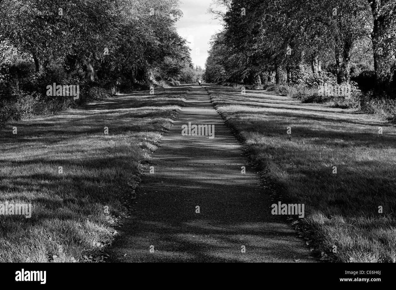 carton walk maynooth ireland Avenue path walkway trail lead head leading heading distant distance tree trees - Stock Image