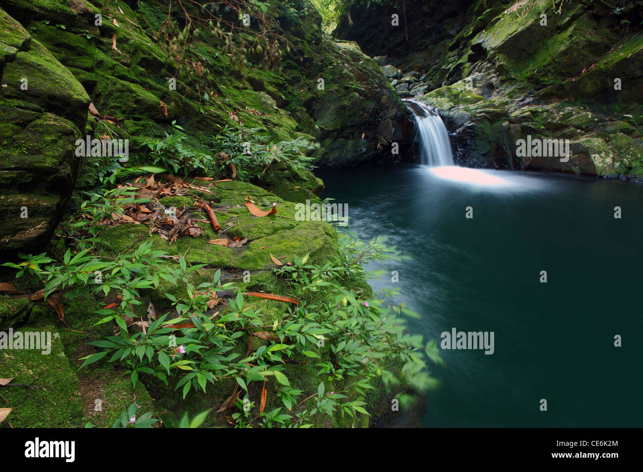 Stream and small waterfall. Bach Ma National Park. Vietnam. - Stock Image