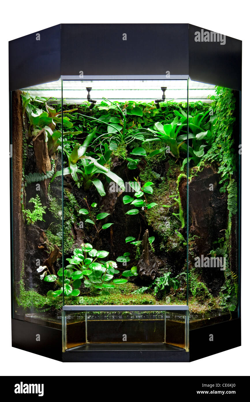 Terrarium For Rain Forest Pet Animals Like Exotic And Tropical Frogs