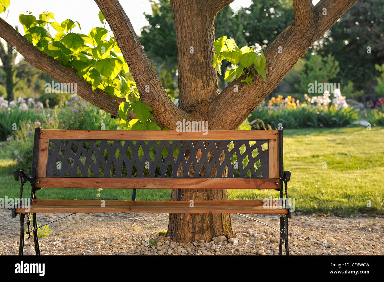 Wooden bench in a garden under a tree, Provence, France - Stock Image