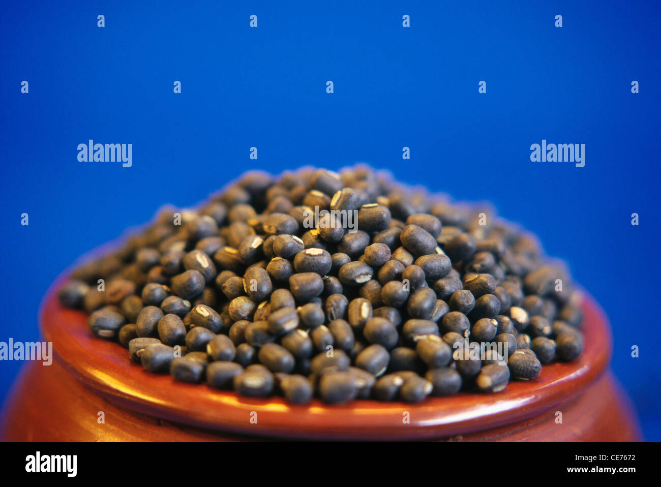 Whole Black Lentils Urad Dal Black Gram Lens Culinaris In Stock Photo Alamy