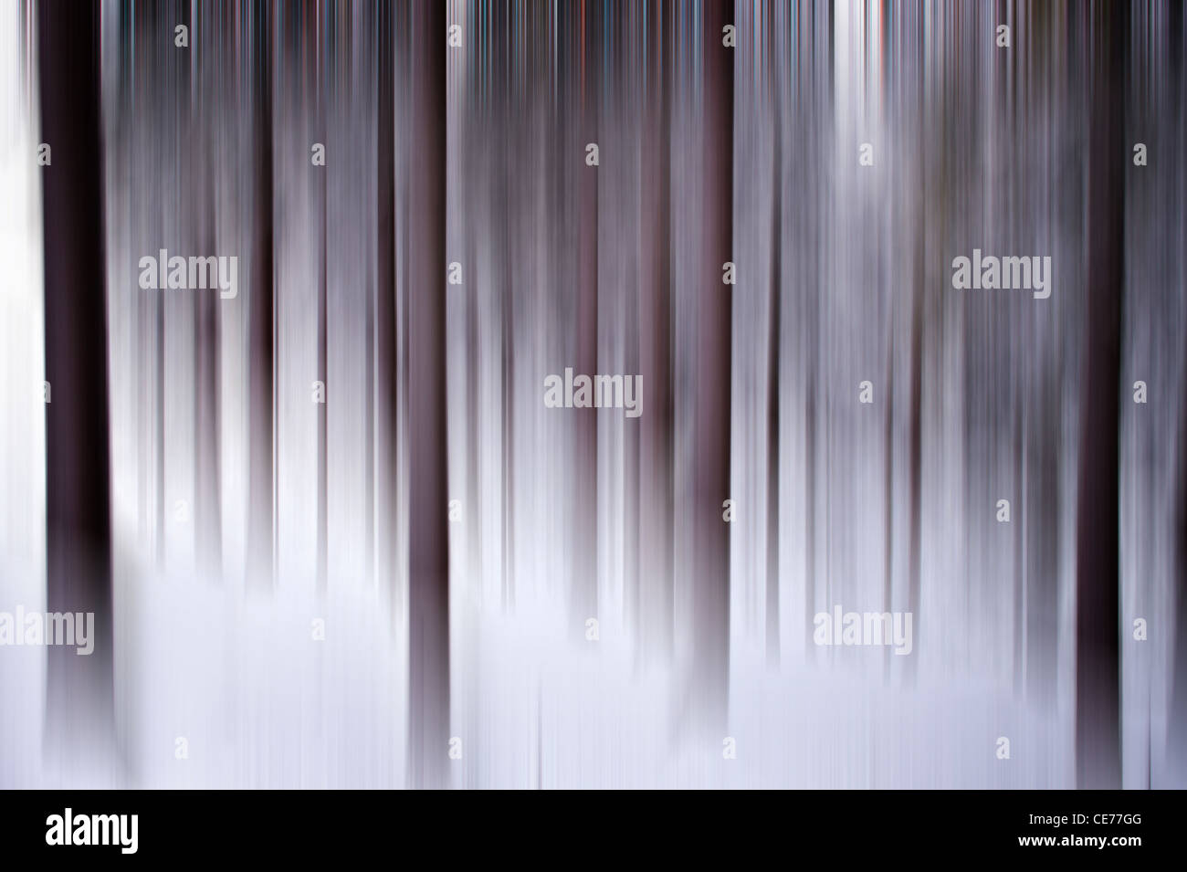Abstract winter forest scene Stock Photo