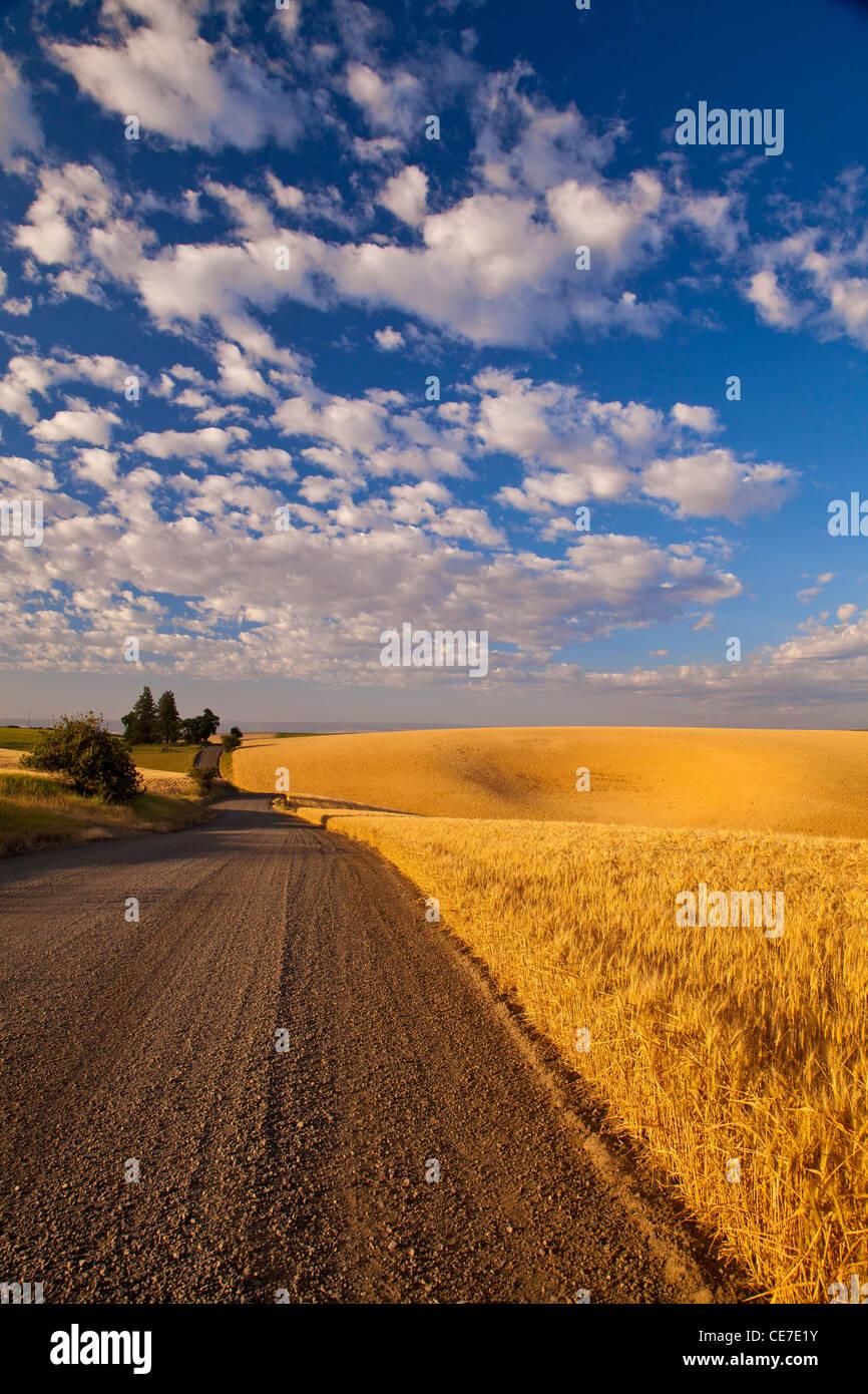 Gravel road winds along ripe wheat fields, near Kendrick, Idaho, USA - Stock Image