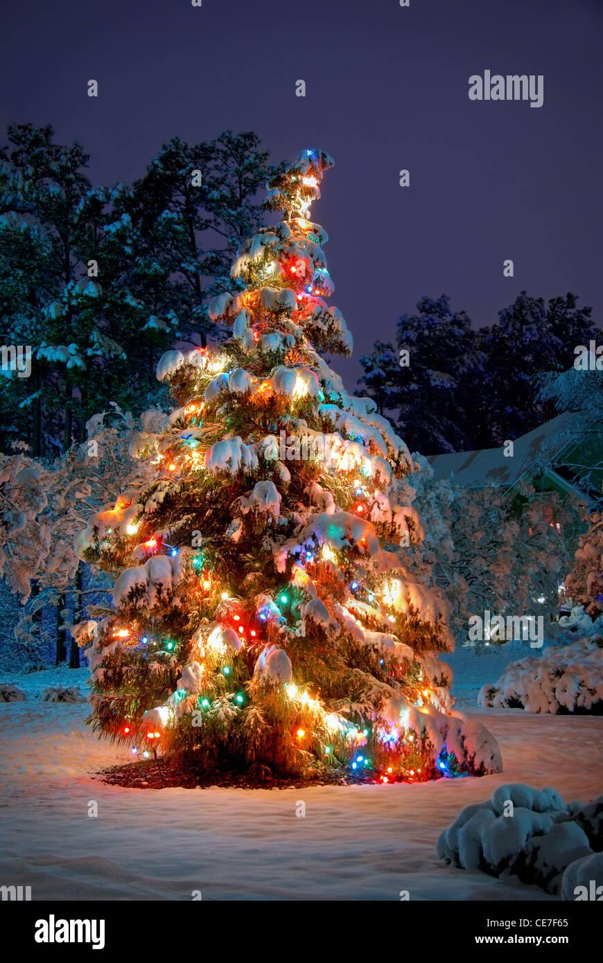 christmas snow trees night lights stock photos christmas. Black Bedroom Furniture Sets. Home Design Ideas