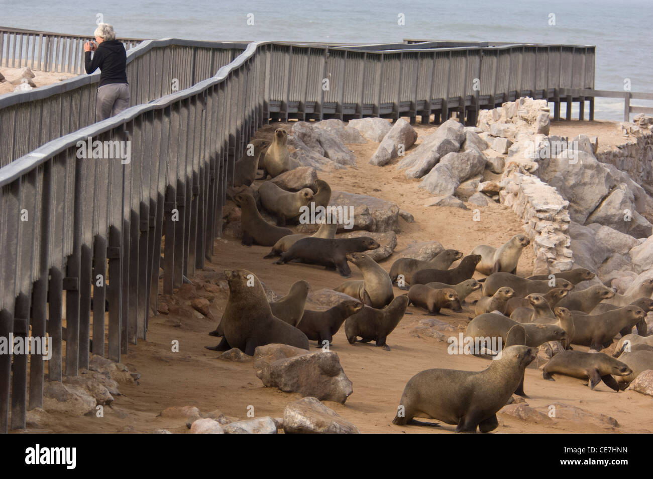 Walkway from where visitors can watch the Cape Fur Seals colony, Cape Cross, Namibia. - Stock Image