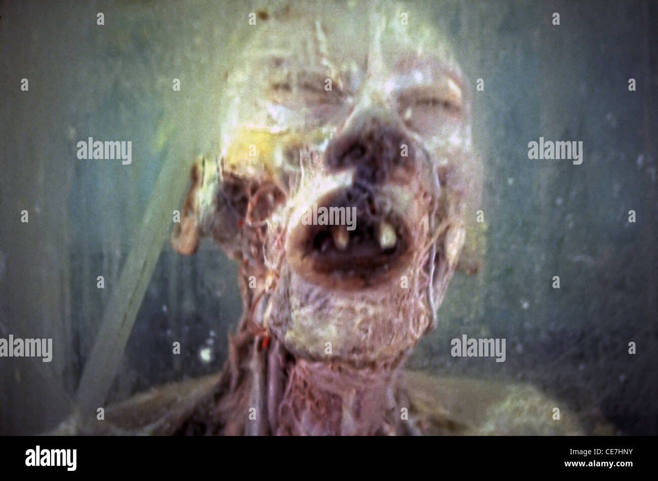 Corpse in formaldehyde jar displayed in the Beijing Museum of Natural History located at Dongcheng District, Beijing - Stock Image
