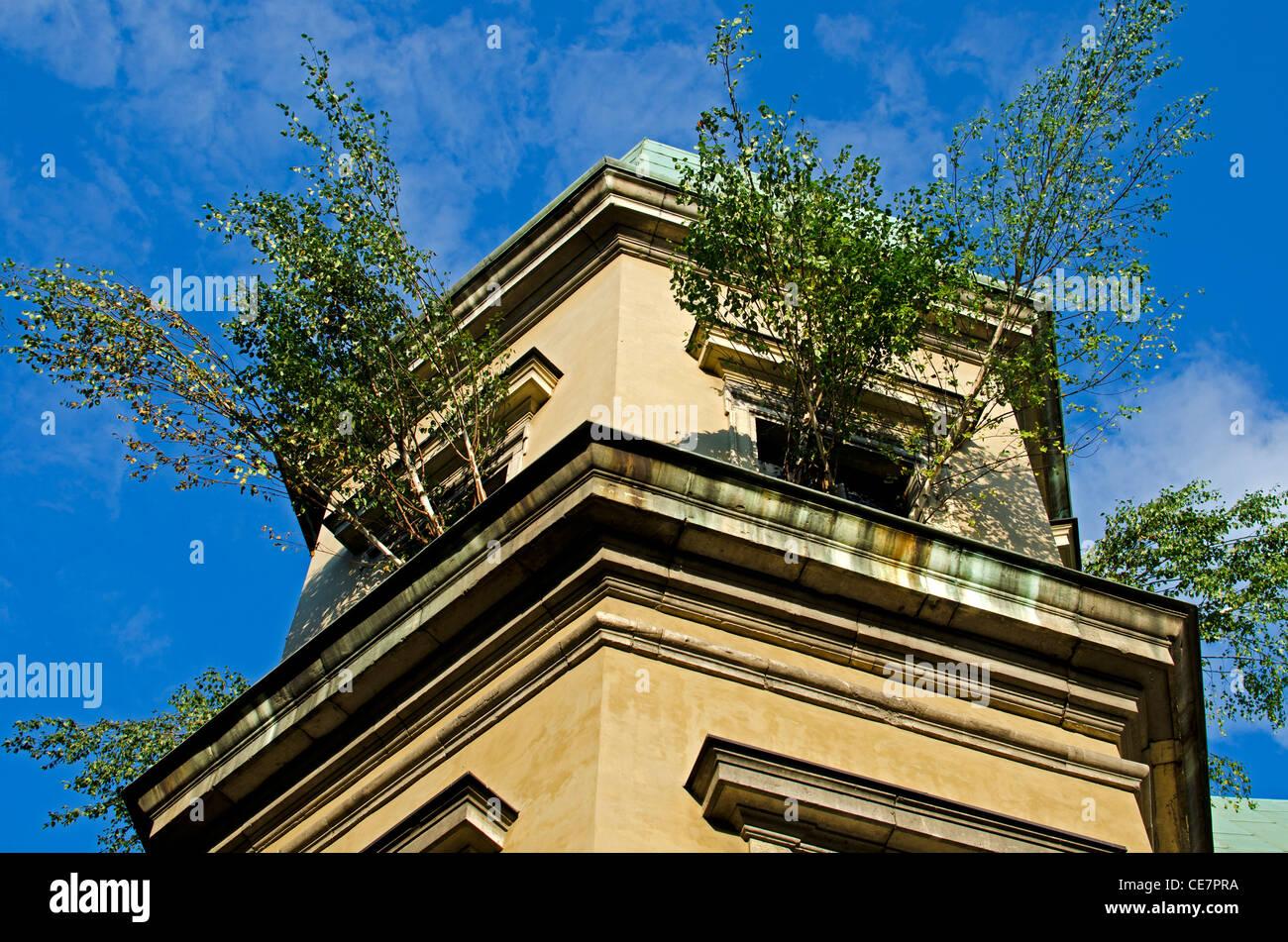 Tree growing in Ujazdow Castle through windows. - Stock Image
