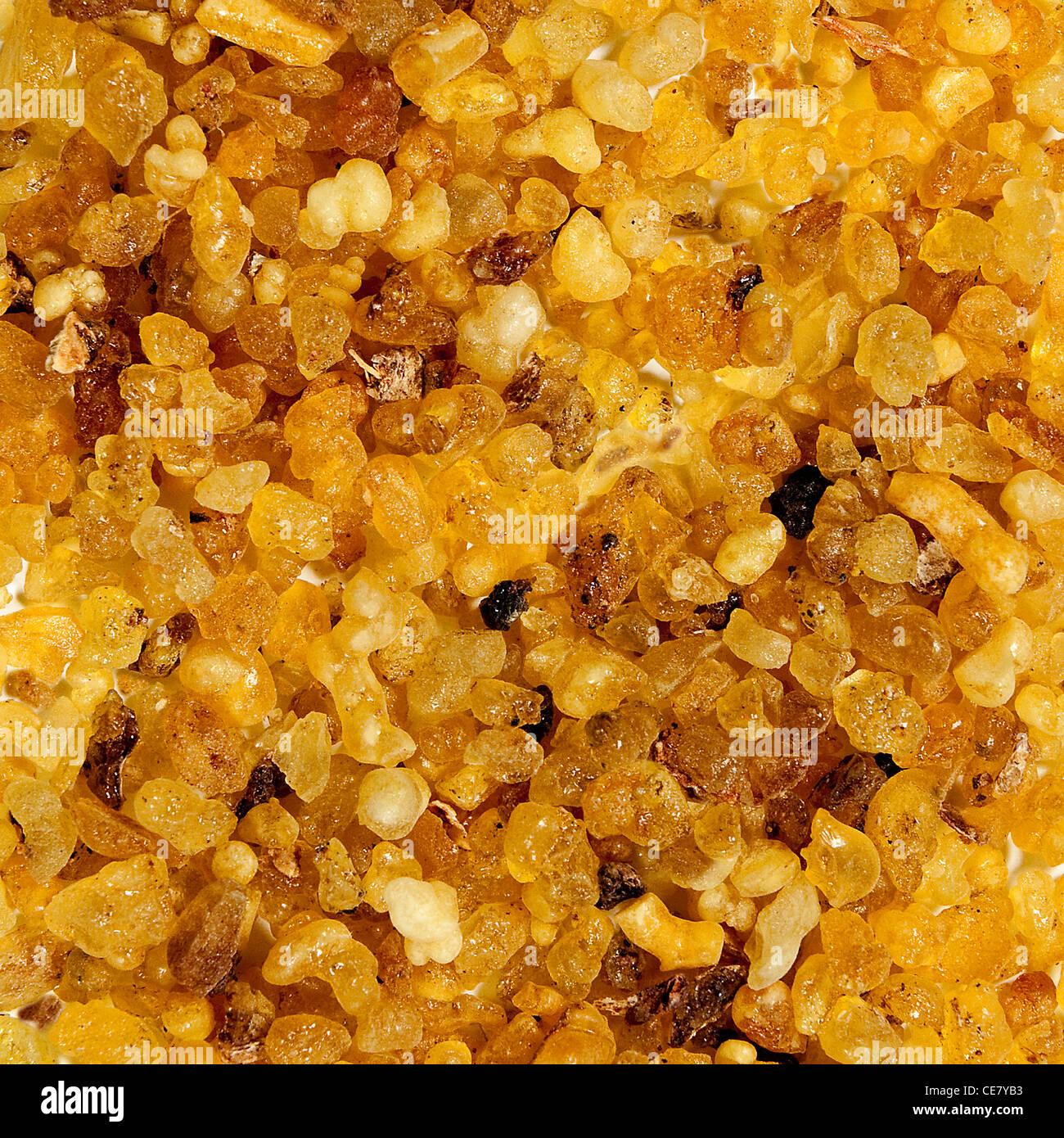 Frankincense from Somalia - Stock Image