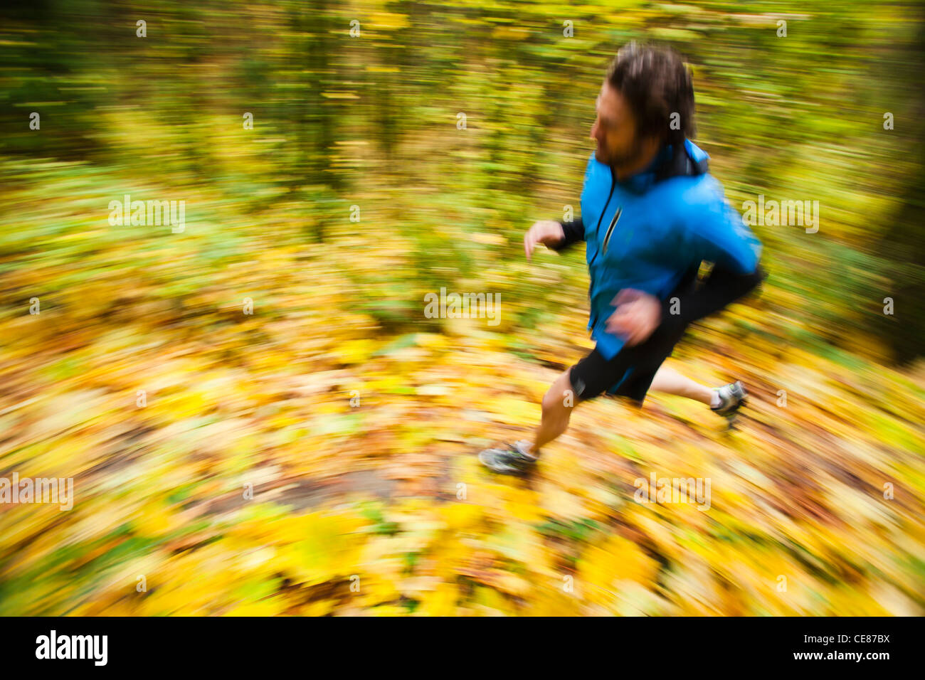 A high angle panning view of a man trail running in fall colors. - Stock Image