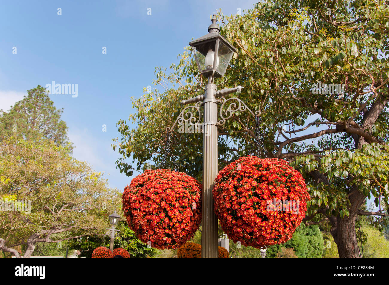 Ball Shaped Flowers Stock Photos & Ball Shaped Flowers Stock Images ...