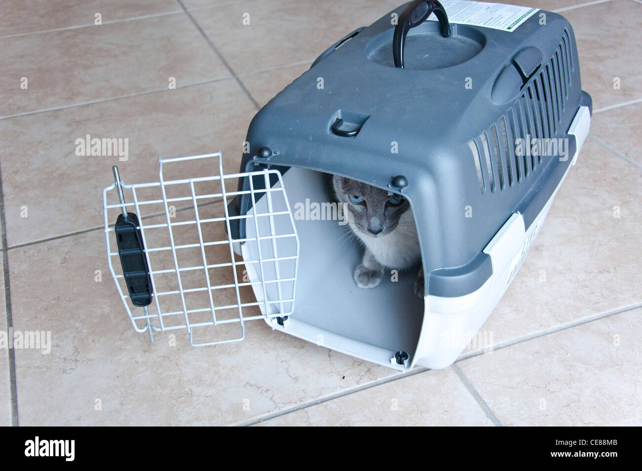 Pet Carrier Travel Stock Photos & Pet Carrier Travel Stock Images ...
