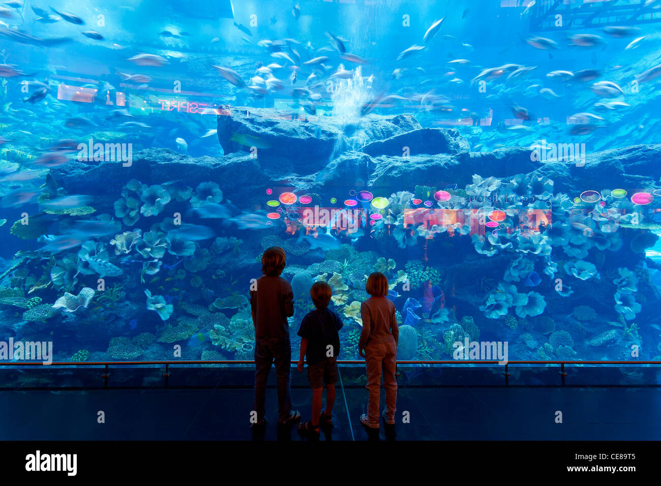 Dubai, Small crowd of visitors gather at massive window of Dubai Aquarium at Dubai Mall - Stock Image