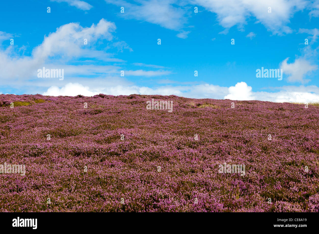 Kinder Scout - Stock Image