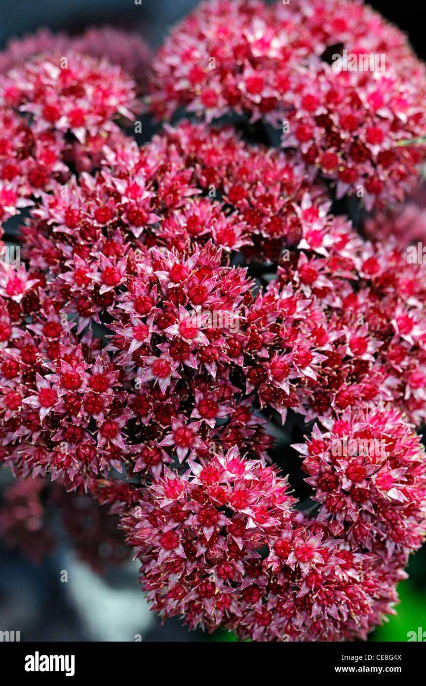 Aubergine Flowers Stock Photos & Aubergine Flowers Stock Images - Alamy