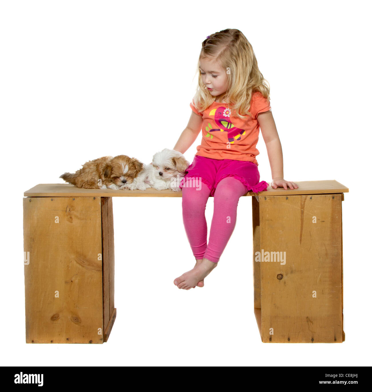 a little girl or toddler singing her puppies to sleep two puppies are laying on a bench, Isolated on a white background - Stock Image