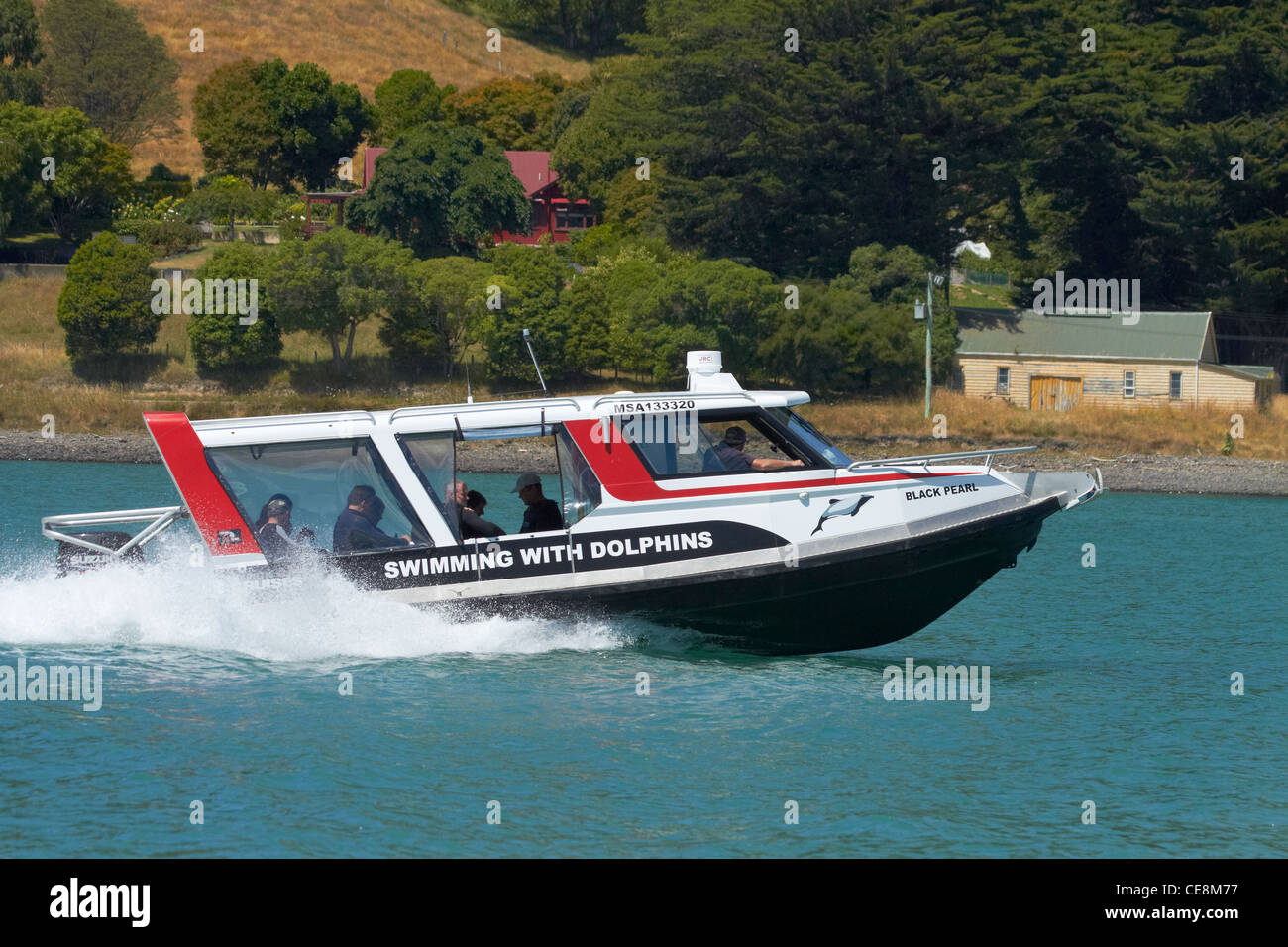 Swimming with dolphins boat, Black Cat Cruises, Akaroa Harbour, Banks Peninsula, Canterbury, South Island, New Zealand - Stock Image