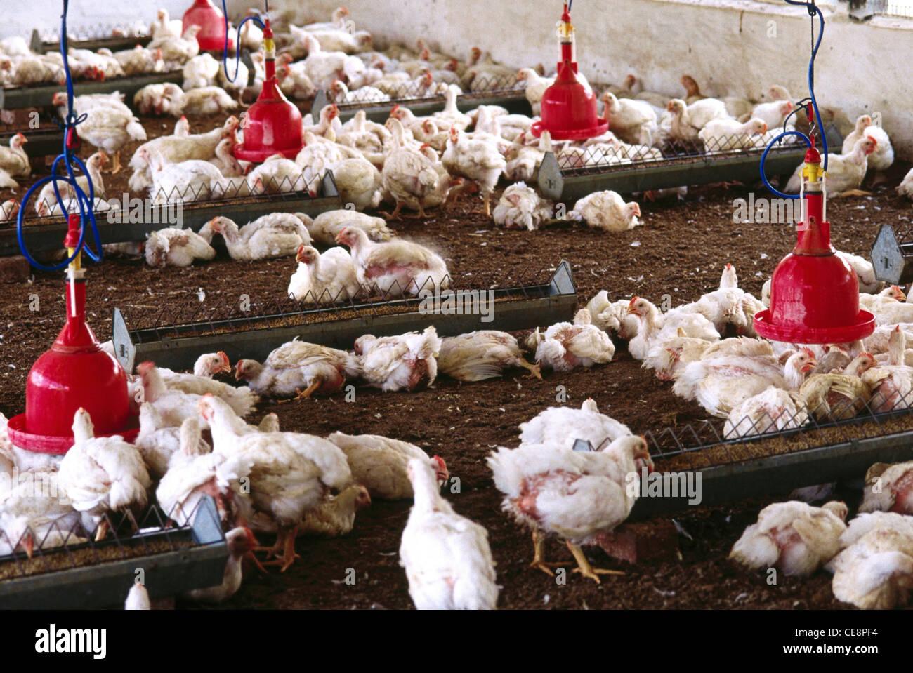 Farming Karnataka Stock Photos & Farming Karnataka Stock Images