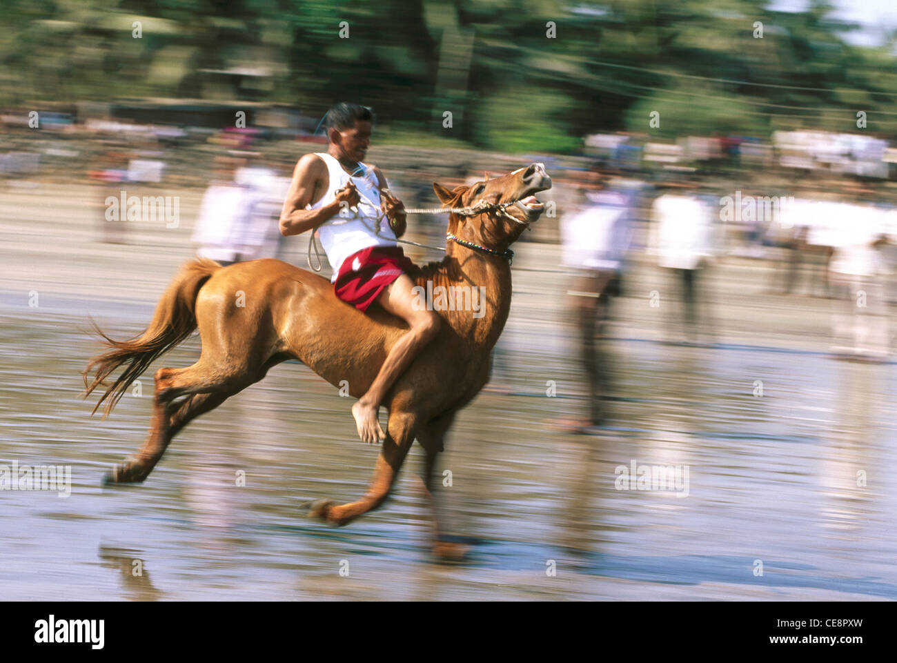 MBT 80454 : Horse Race , Alibaug , Maharashtra , india Stock Photo