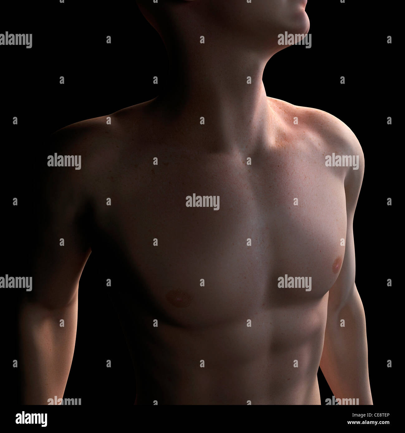 Male torso, computer artwork. - Stock Image