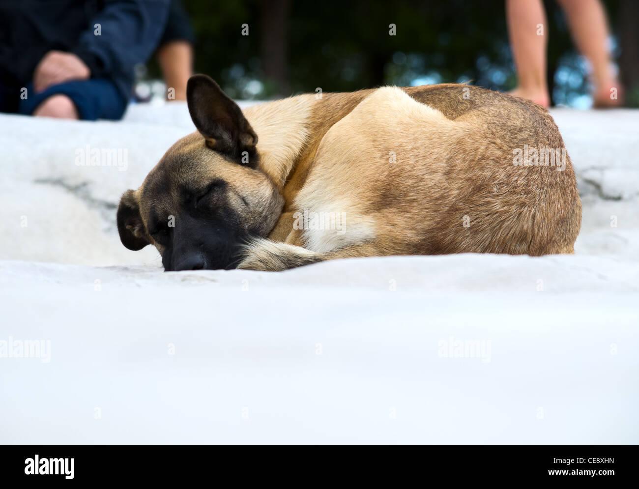 Dog sleeping outdoor - Stock Image