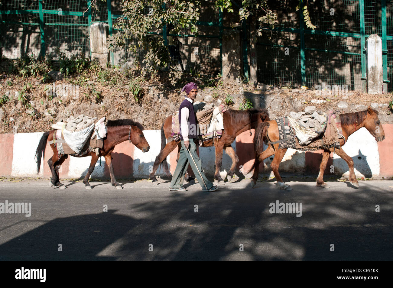 Man leading poor horses who carry stones from the riverbed of the Ganges for building sites, Rishikesh, Uttarakhand, - Stock Image