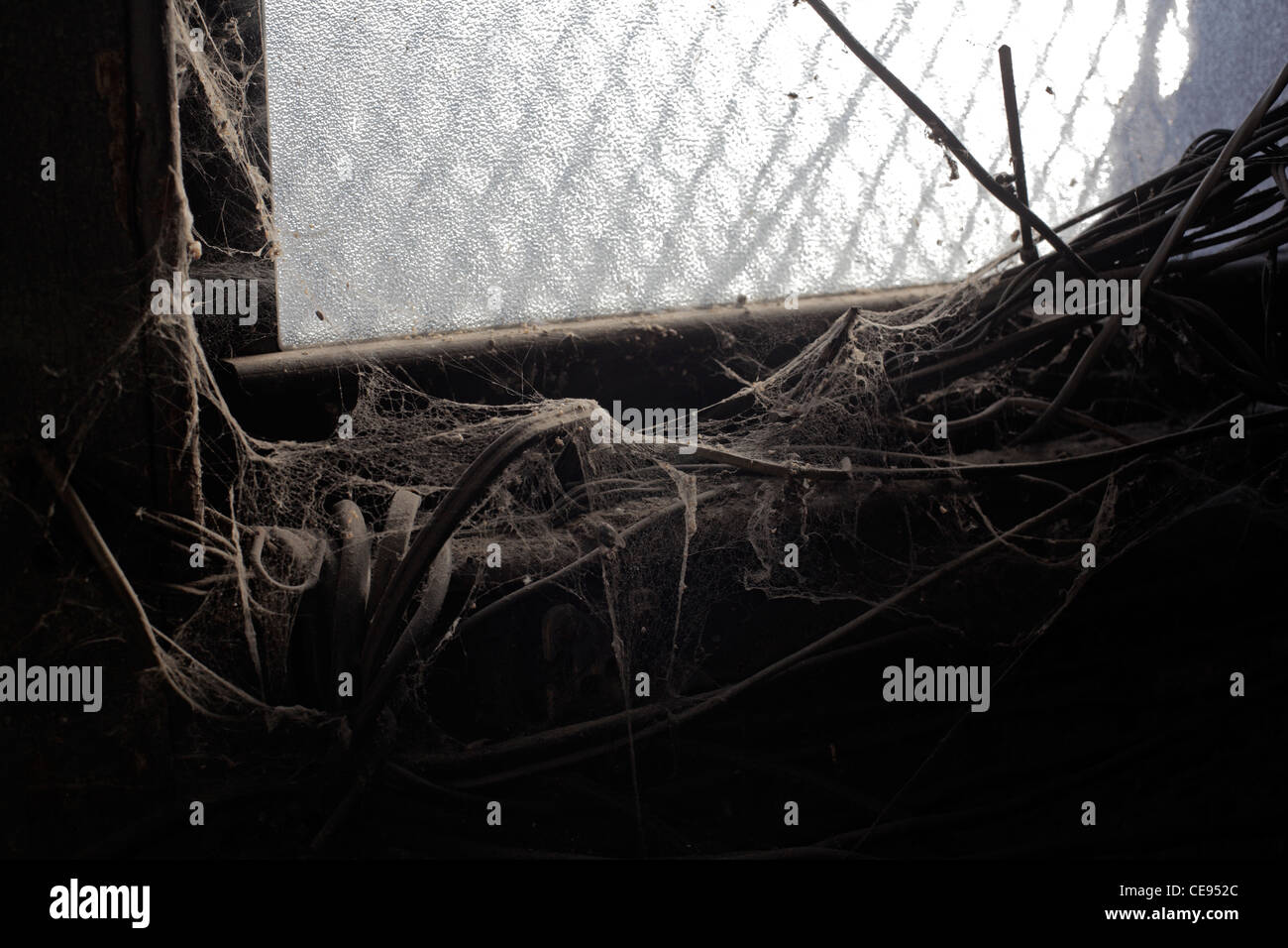 spider webs at basement window - Stock Image
