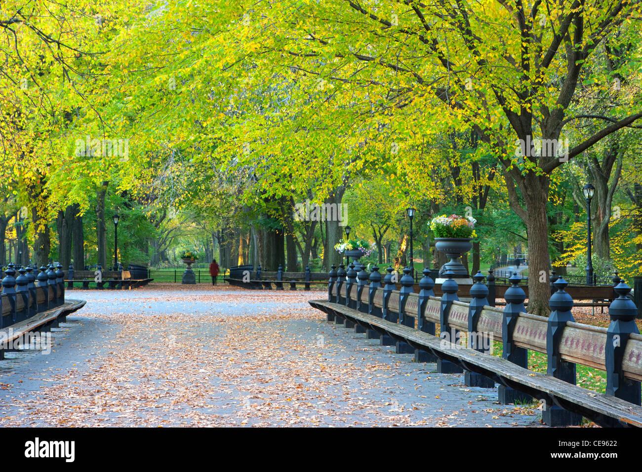 Central Park Benches Stock Photos Central Park Benches Stock
