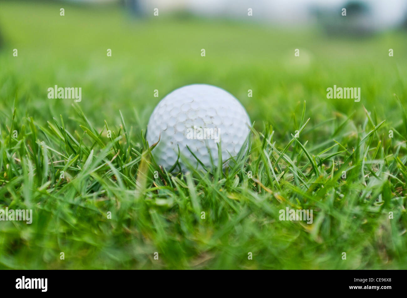 A Golf Ball on The Fairway - Stock Image
