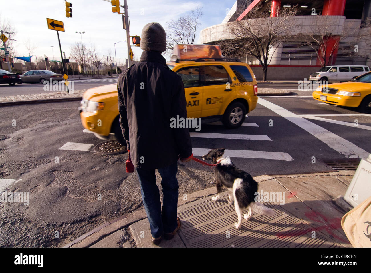 Man with knit cap and winter coat standing with his dog on street corner in New York City waiting to cross a busy - Stock Image