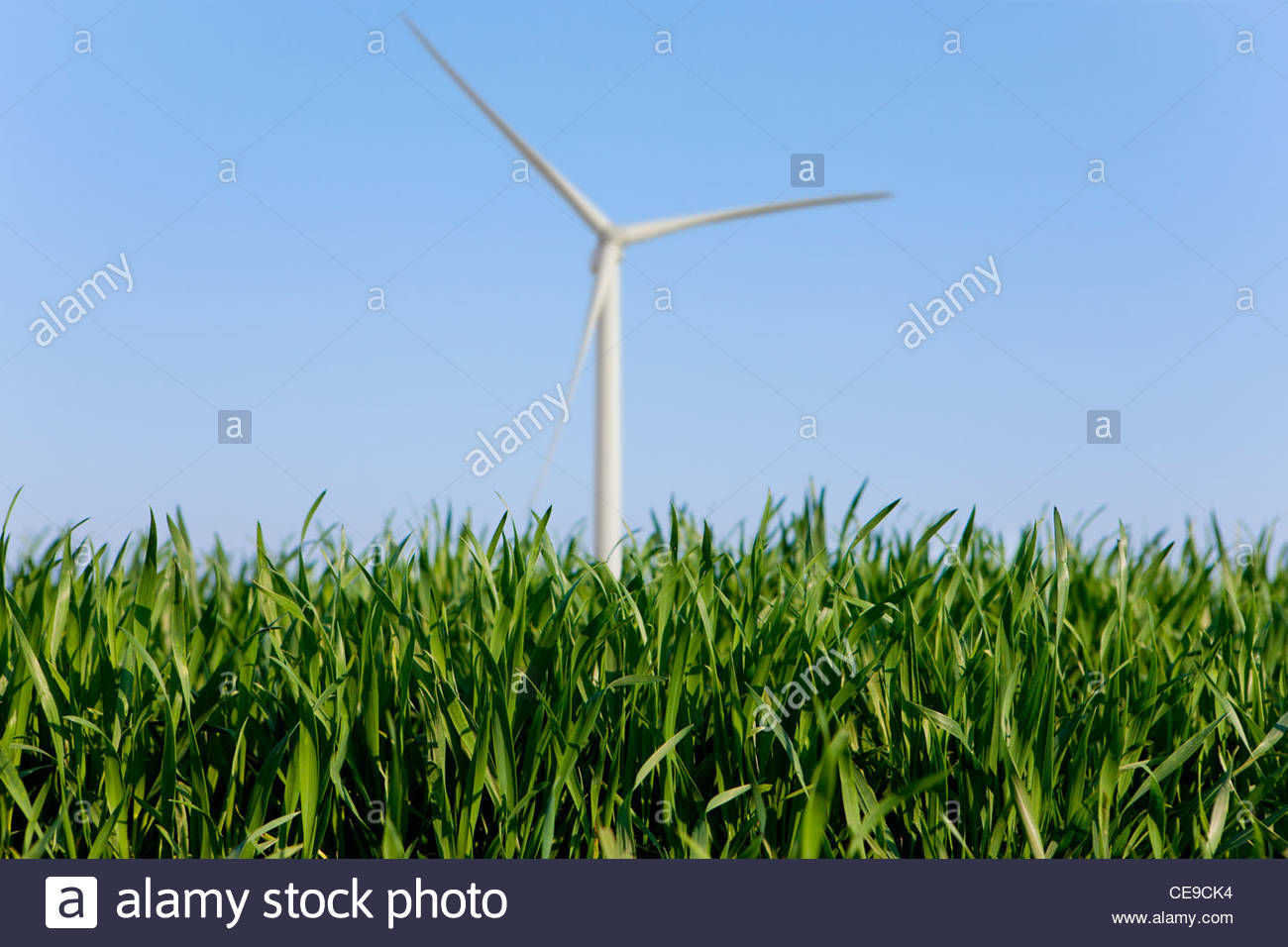 Close up of grass with wind turbine in background - Stock Image