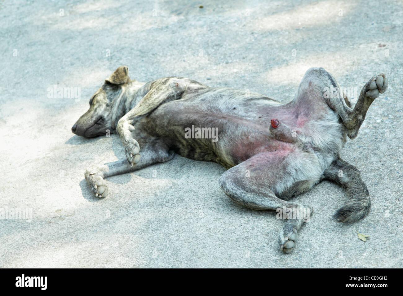 Male dog sleeps cosily on a street - Stock Image