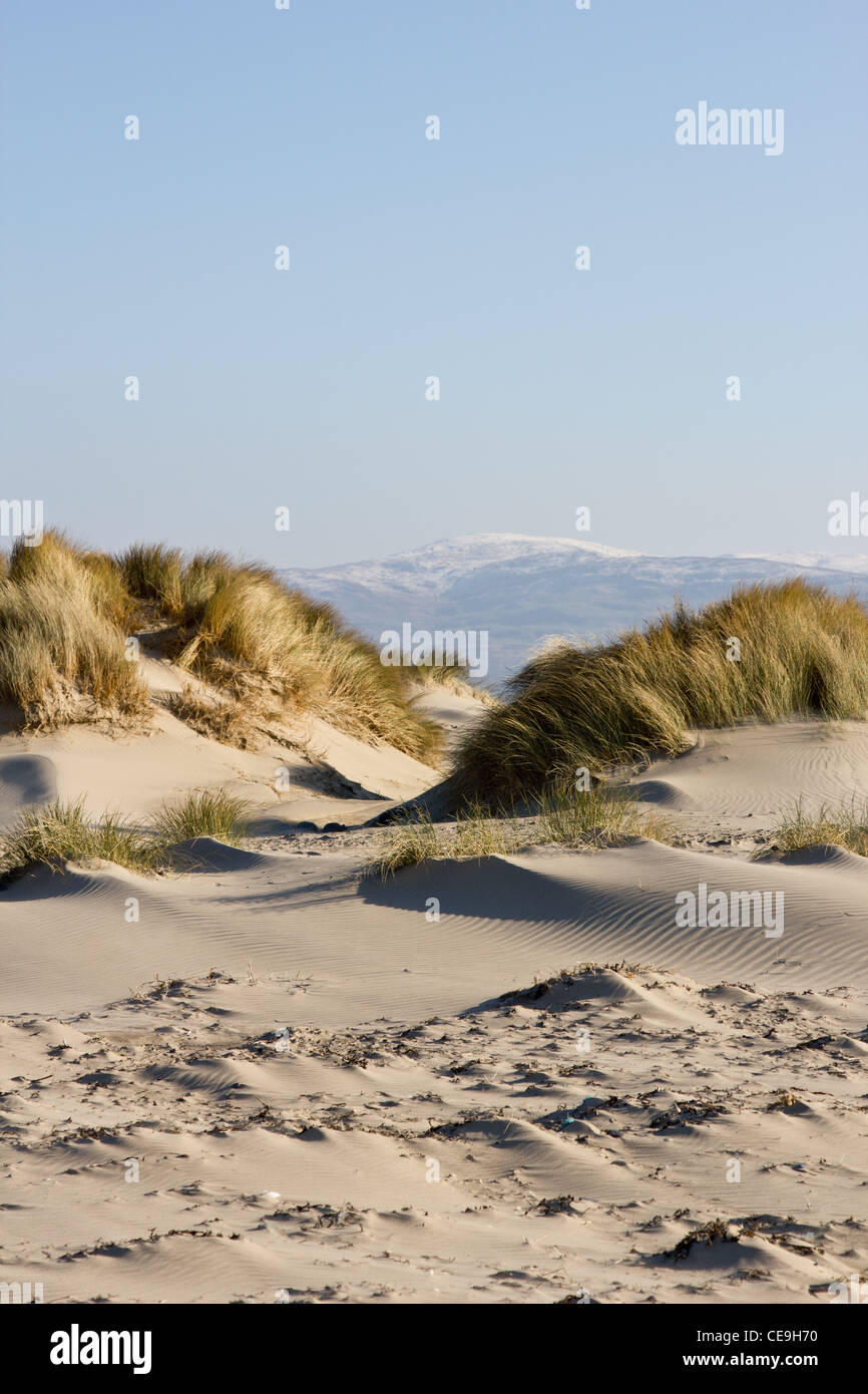 Sand dunes, maram grass and snow capped mountains - Stock Image